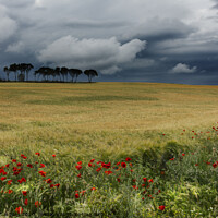 Buy canvas prints of Field with poppies, trees and clouds. Horizontal by Vicente Sargues
