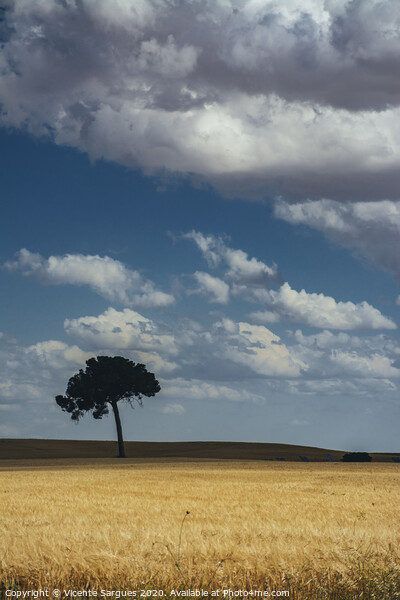 The lonely tree in the field Framed Print by Vicente Sargues