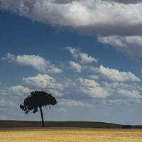 Buy canvas prints of The lonely tree in the field by Vicente Sargues