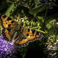 Buy canvas prints of Small Tortoiseshell Butterfly by Don Nealon