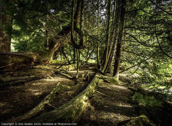 Fallen trees Print by Don Nealon