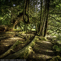 Buy canvas prints of Fallen trees by Don Nealon