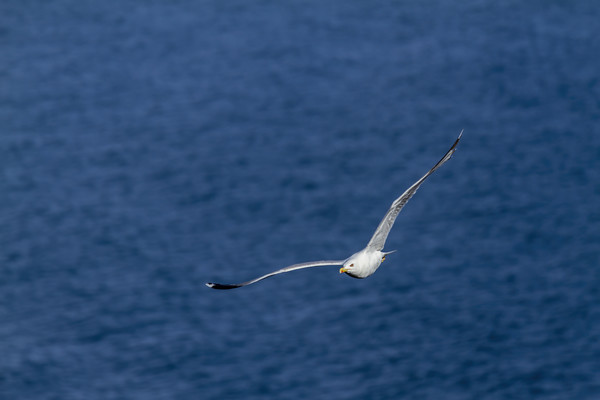 Young seagull flying over the lake Print by Arpad Radoczy