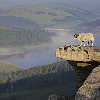 Buy canvas prints of A sheep enjoying the view from Bamford edge by MIKE HUTTON
