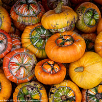Buy canvas prints of Fresh harvested pumpkins ready for sale by Frank Bach
