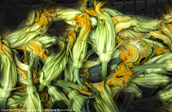 Fresh courgettes or zucchini flowers Framed Print by Frank Bach