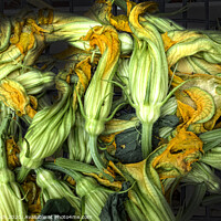 Buy canvas prints of Fresh courgettes or zucchini flowers by Frank Bach