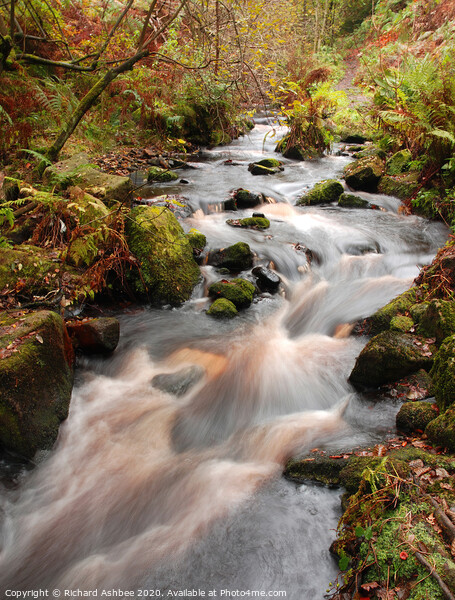 Babbling stream running through woodland Framed Mounted Print by Richard Ashbee