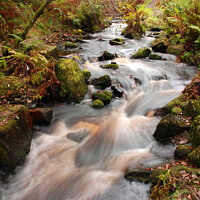 Buy canvas prints of Babbling stream running through woodland by Richard Ashbee