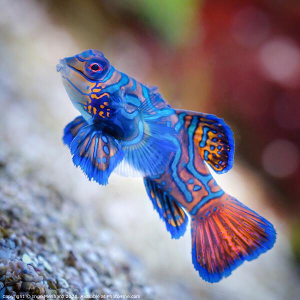 Blue Star Fish Framed Print by Ingo Menhard