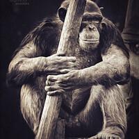 Buy canvas prints of Monkey warrior by Ingo Menhard