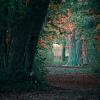 Buy canvas prints of The hidden tree by Ingo Menhard