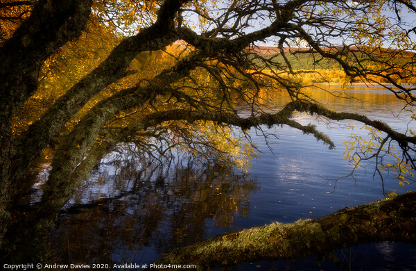 Autumn afternoon golden glow Framed Mounted Print by Andrew Davies