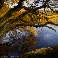 Buy canvas prints of Autumn afternoon golden glow by Andrew Davies