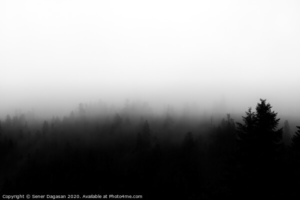 Forest at foggy weather Canvas Print by Sener Dagasan