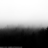 Buy canvas prints of Forest at foggy weather by Sener Dagasan