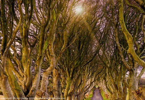 The dark hedges Canvas Print by Cecil Owens
