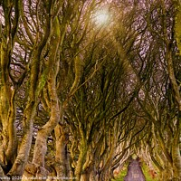 Buy canvas prints of The dark hedges by Cecil Owens