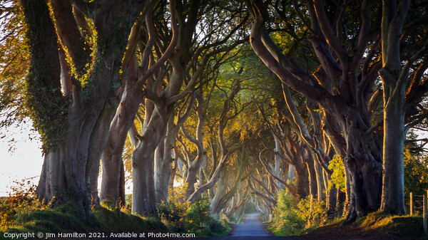 The Dark Hedges Northern Ireland Canvas Print by jim Hamilton