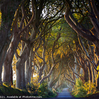 Buy canvas prints of The Dark Hedges Northern Ireland by jim Hamilton