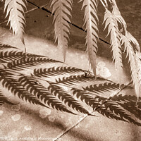 Buy canvas prints of Fern and shadow by Robert Thrift