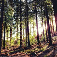 Buy canvas prints of Sun through the trees. by James Cockerell