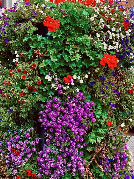Plant  Acrylic by Abi KRISHNANKUTTY NAIR