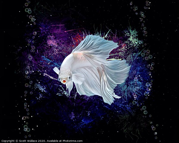 Neon White Betta Fish Aquatic Portrait  Print by Scott Wallace