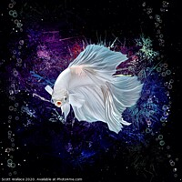Buy canvas prints of Neon White Betta Fish Aquatic Portrait  by Scott Wallace