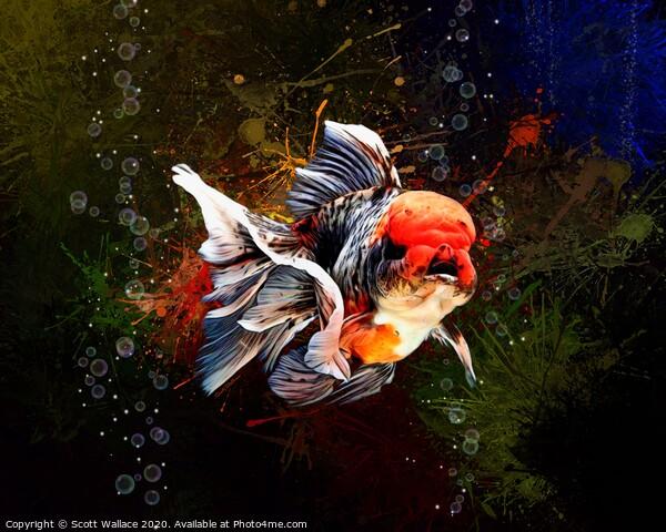 Calico Oranda Goldfish Aquatic Portrait  Print by Scott Wallace