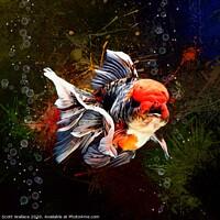 Buy canvas prints of Calico Oranda Goldfish Aquatic Portrait  by Scott Wallace