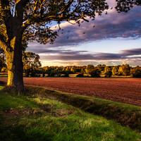 Buy canvas prints of Suffolk Rural Sunset near Harkstead by Gary Sanford