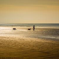 Buy canvas prints of Morning Dog Walking - Amroth by Paddy Art
