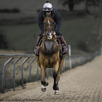 Buy canvas prints of Horse at full speed up a 6 furlong all-weather hil by Paul Tyzack