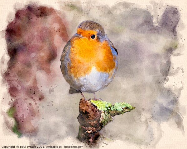 Robin Framed Mounted Print by Paul Tyzack