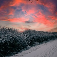 Buy canvas prints of Wintery lane at sunset by Paul Tyzack
