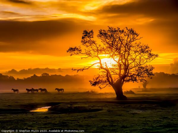 Sunrise herd, New Forest National Park Canvas Print by Stephen Munn