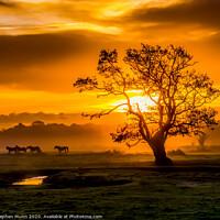 Buy canvas prints of Sunrise herd, New Forest National Park by Stephen Munn