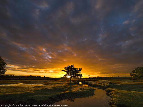 Stream sunrise, New Forest National Park  Framed Mounted Print by Stephen Munn