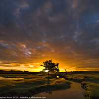 Buy canvas prints of Stream sunrise, New Forest National Park  by Stephen Munn