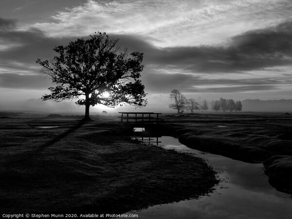 Sunrise, Longwater Lawn, New Forest National Park in black and white Framed Mounted Print by Stephen Munn