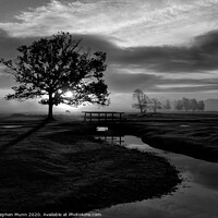 Buy canvas prints of Sunrise, Longwater Lawn, New Forest National Park in black and white by Stephen Munn