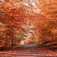 Buy canvas prints of Autumn in Ormeau Park Belfast by Jennifer Nelson