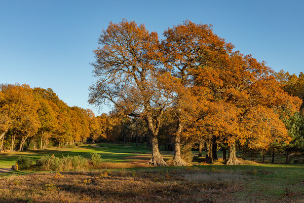 Autumn trees in Bracknell Forest Canvas Print by Andy Dow