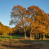 Buy canvas prints of Autumn trees in Bracknell Forest by Andy Dow