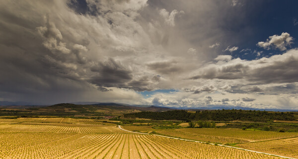 Storms approach over Rioja vineyards  Canvas Print by Andy Dow