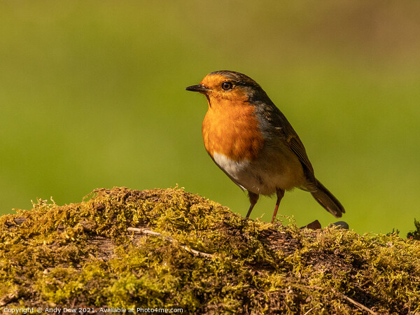 Robin on a log Canvas Print by Andy Dow