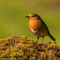 Buy canvas prints of Robin on a log by Andy Dow