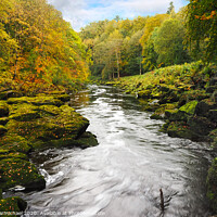 Buy canvas prints of The Strid, Yorkshire Dales by Janet Carmichael