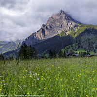 Buy canvas prints of Swiss meadow in front of a mountain by Paul Stapleton